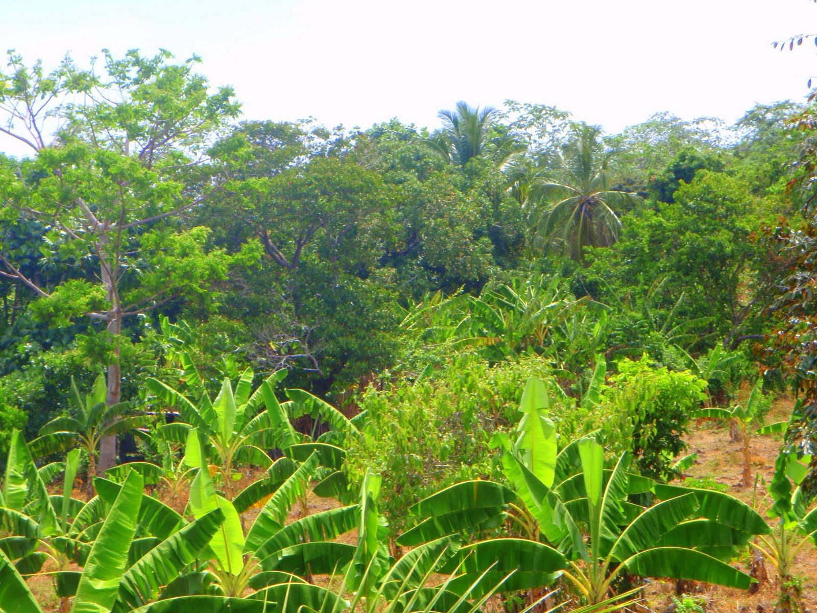 Big Corn Island Real Estate For Sale
